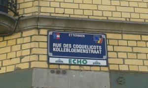 cocquelicots_verkleind